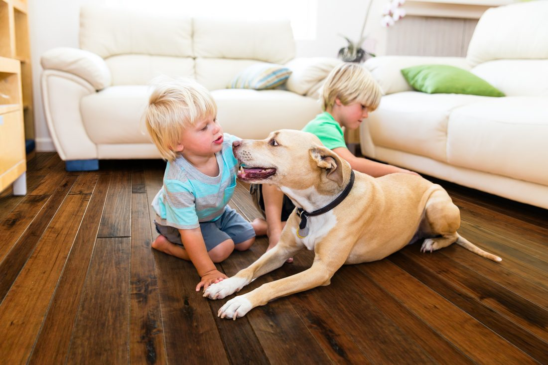 Image of two children and a dog playing on a wood floor.