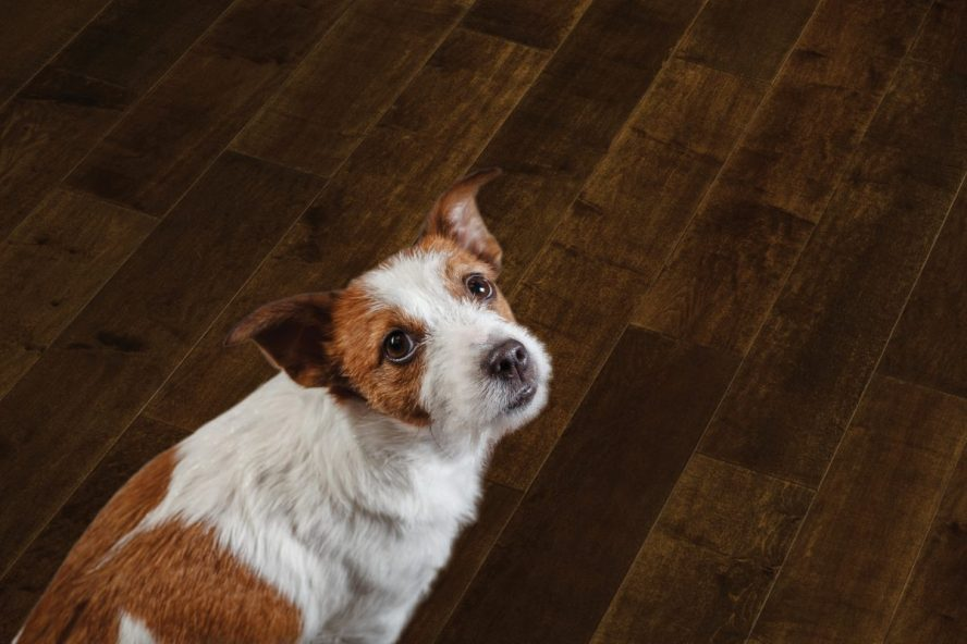 Image showing a dog sitting on wood flooring.